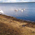 ウトナイ湖知っていますか?たまには北海道の観光名所を紹介してみよう。