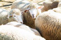 眠れる方法の新提案!「羊を1億2345万6789」から数える!!
