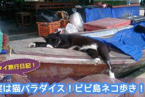 実は猫パラダイス!ピピ島の猫たちを紹介